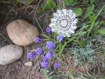 mila-haugova-zahrada-kridla-cipky-014.jpg